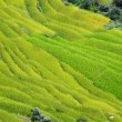 Spectacular rice fields on the Himalayan slopes, Nepal — Stock Photo #34879185