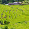 Spectacular rice fields on the Himalayan slopes, Nepal — Stock Photo #34879191