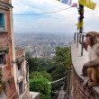 A monkey relaxing at Swayambhunath temple. Great upper view of the city of Kathmandu, Nepal — Stock Photo