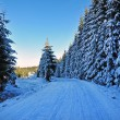 Winter road with snow covered spruces in the mountains  — Stock Photo #36772687