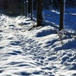 Footsteps in the snow — Stock Photo