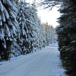 Winter road with snow covered spruces in the mountains — Stock Photo #36773163