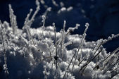 Ice crystals and frozen plants at winter — Stock Photo