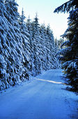 Winter road with snow covered spruces in the mountains — Stock fotografie