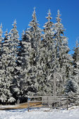 Snow covered spruce trees and blue sky — Stock Photo