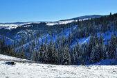 Sneeuw bedekte vuren bomen en blauwe hemel — Stockfoto