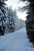 Winter road with snow covered spruces in the mountains — Stockfoto