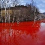 Постер, плакат: Environmental disaster Panorama of a lake full with contaminate