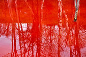 Reflection of dead trees in a contaminated lake water — Stock Photo