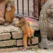 Macaque monkey with her baby, at Swayambhunath monkey temple. Kathmandu, Nepal — Stock Photo #37270731