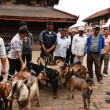 Animal, goat sacrifice in Nepal — Stock Photo #37374277