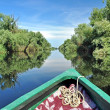 Stock Photo: Flooded forest in Danube delta