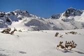 在冬天白雪覆盖的山峦 — 图库照片