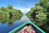 Flooded forest in Danube delta — Stock Photo