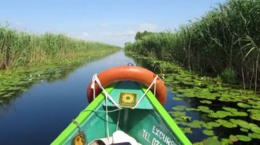 Boat trip in the Danube delta — Stock Video