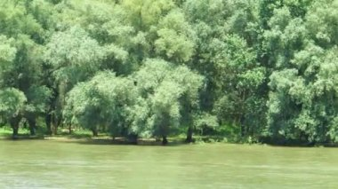 Beautiful quiet water channel with swamp vegetation in the Danube Delta, Romania. View from a moving vessel — Stockvideo