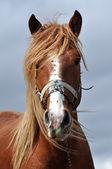 Beautiful horse close up — Stock Photo