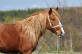 Horse in the outdoors — Stock Photo