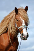 Portrait of a beautiful horse — Stock Photo