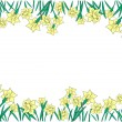 Frame from yellow narcissi — Stock Vector
