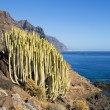 Canary Island Spurge — Stock Photo #13298298