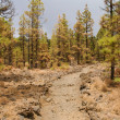 Stock Photo: Forest partially burned