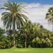 Palm garden in Tenerife — Stock Photo #19389225