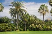 Palm garden in Tenerife — Stock Photo