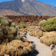 Trail to Mount Teide — Stock Photo