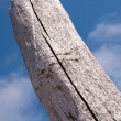 A wooden beach pole — Stock Photo