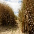 Between the dunes — Foto de Stock