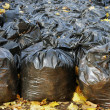 Many black garbage bags filled-in by autumn fallen leaves in the park — Stock Photo