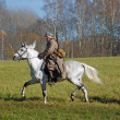 A man rides a white horse — Stock Photo