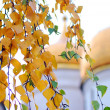 Autumn in Moscow Kremlin — Stock Photo