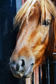 Hlava portrét koně. — Stock fotografie