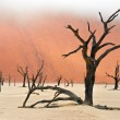 Dead Vlei in Namibia — Stock Photo #25817455
