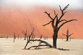 Dead Vlei in Namibia — Stock Photo