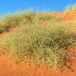 Namib desert, Namibia, South Africa — Stock Photo