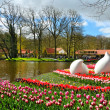 Beautiful spring flowers in Keukenhof park  — Stock Photo