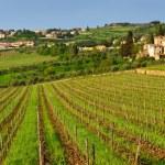Chianti landscape, Tuscany, Italy — Stock Photo