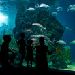 Silhouettes of family with two kids in oceanarium — Stock Photo #26653027