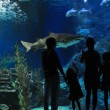 Silhouettes of family with two kids in oceanarium — Stock Photo