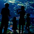 Silhouettes of family with two kids in oceanarium — Stock Photo #26653281