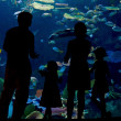 Silhouettes of family with two kids in oceanarium — Stock Photo #26653413