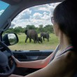 Woman on safari car vacation in South Africa — Stock Photo #46408127