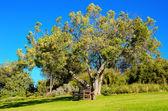 Bänk under träd i parken — Stockfoto