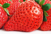 Strawberry. — Stockfoto