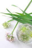 Green onion flowers — Stock Photo