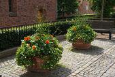 Straat met bloempotten — Stockfoto