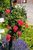 Beautiful hanging flowerpot basket — Stock Photo